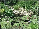 Free Backyard Water Garden Plan