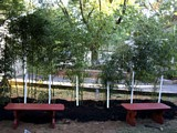 Free Bamboo Privacy Fence Plan