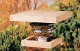 Free Bottle and Wood Bird Feeder Plan