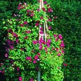 DIY garden obelisk plans