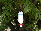 Hummingbird Feeder with Everyday Materials plans